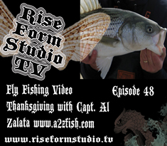 Fly Fishing For Striped Bass Thanksgiving